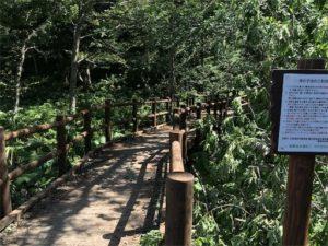 神の子池の入り口です。柵が出来ました・・・